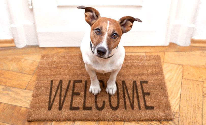 1-pet-friendly-home