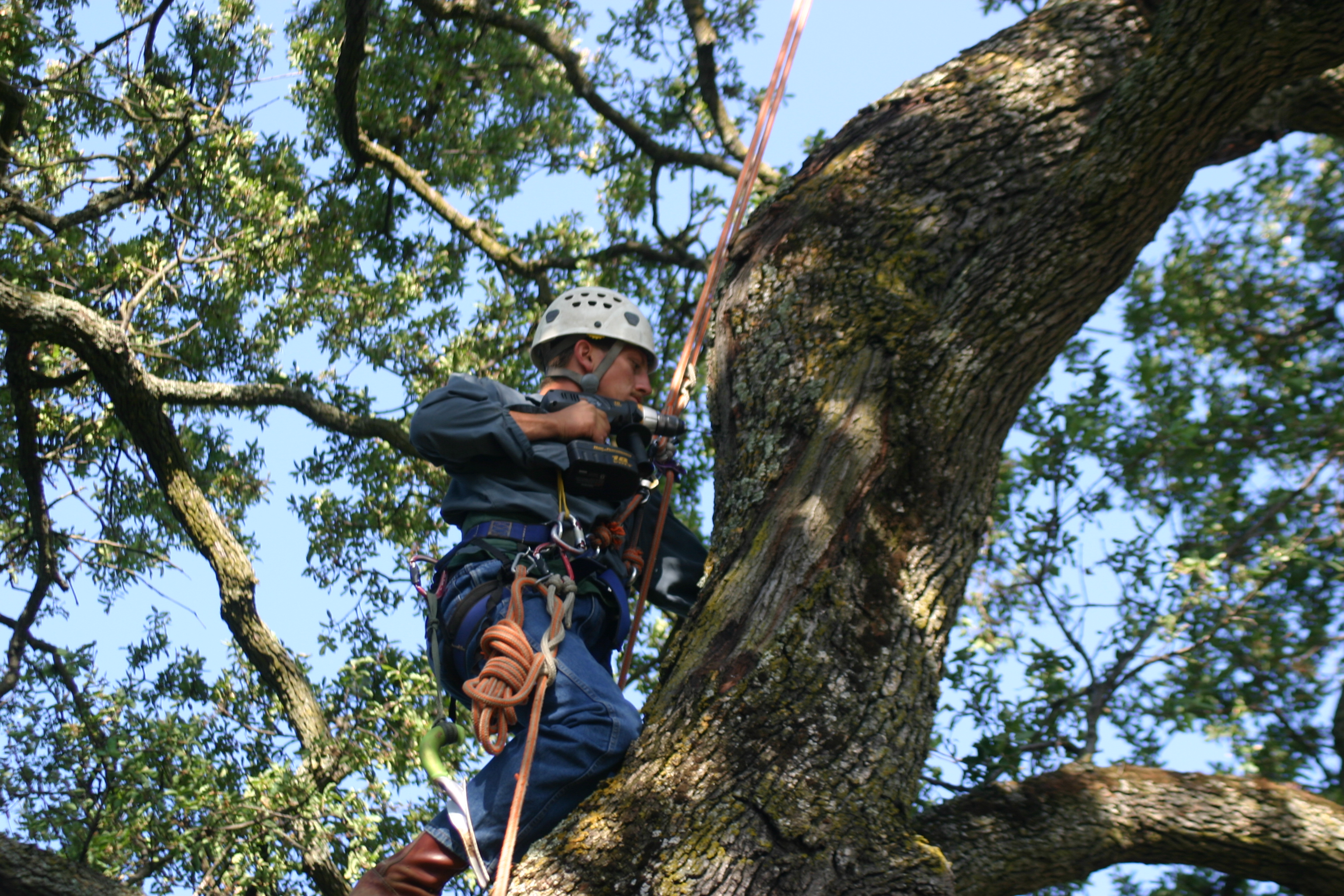 3-good-things-your-arborist-can-help-you-with