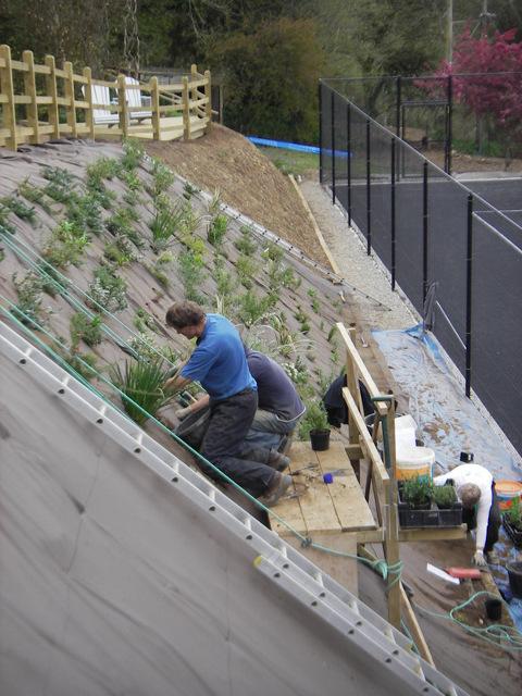 plants_hills_before_tennis