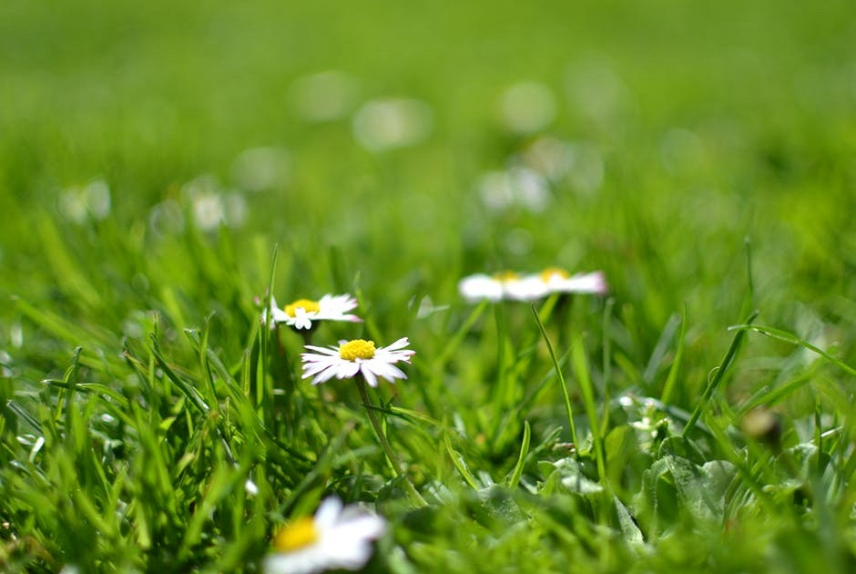 It's Almost That Time of Year Again – Spring Lawn Care 101