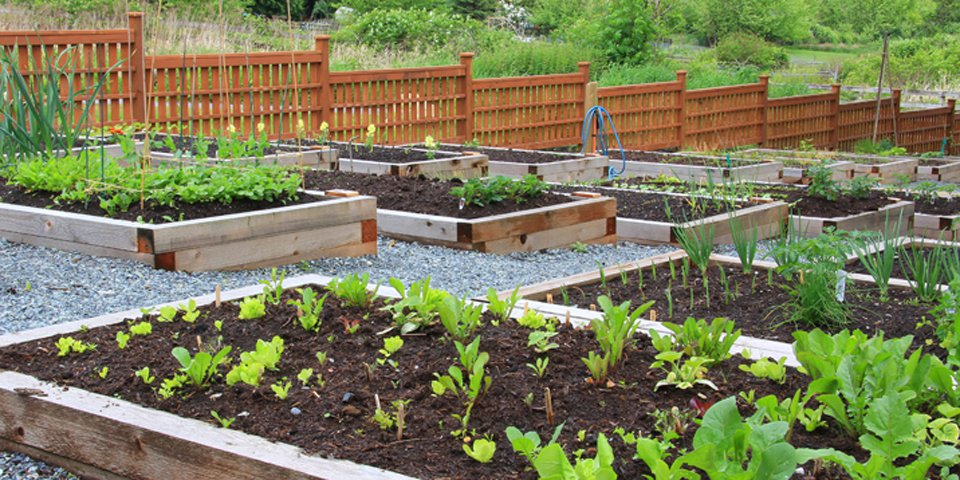 Simple and Effective Ways to Improve Your Garden Soil